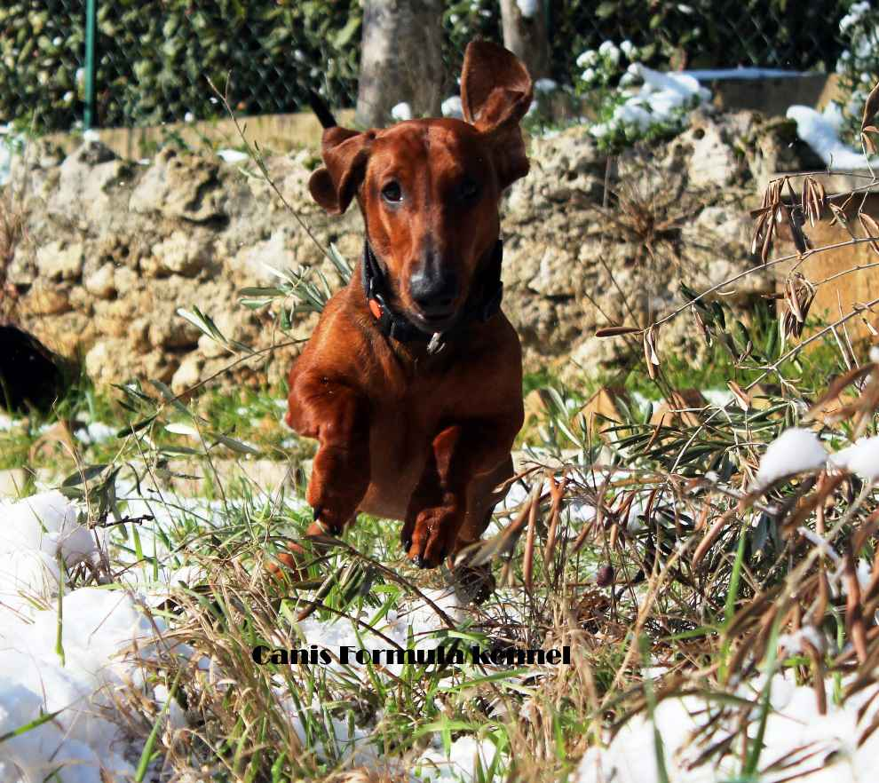 Canis Formula Ares in corsa sulla neve