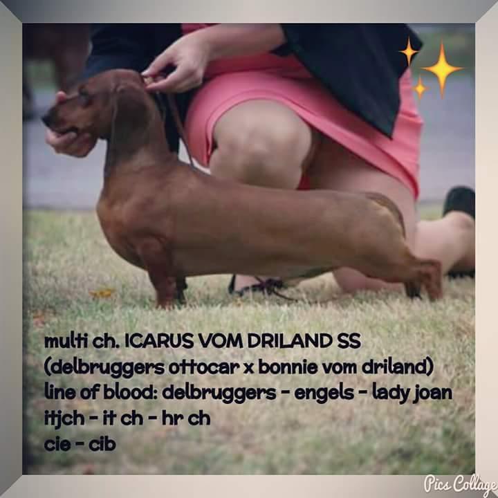 Icarus Von Driland Multi CH