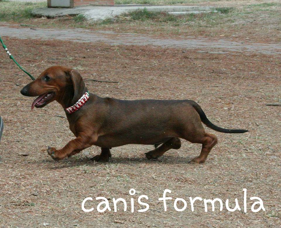 Canis Formula Ares in moviment 3 month