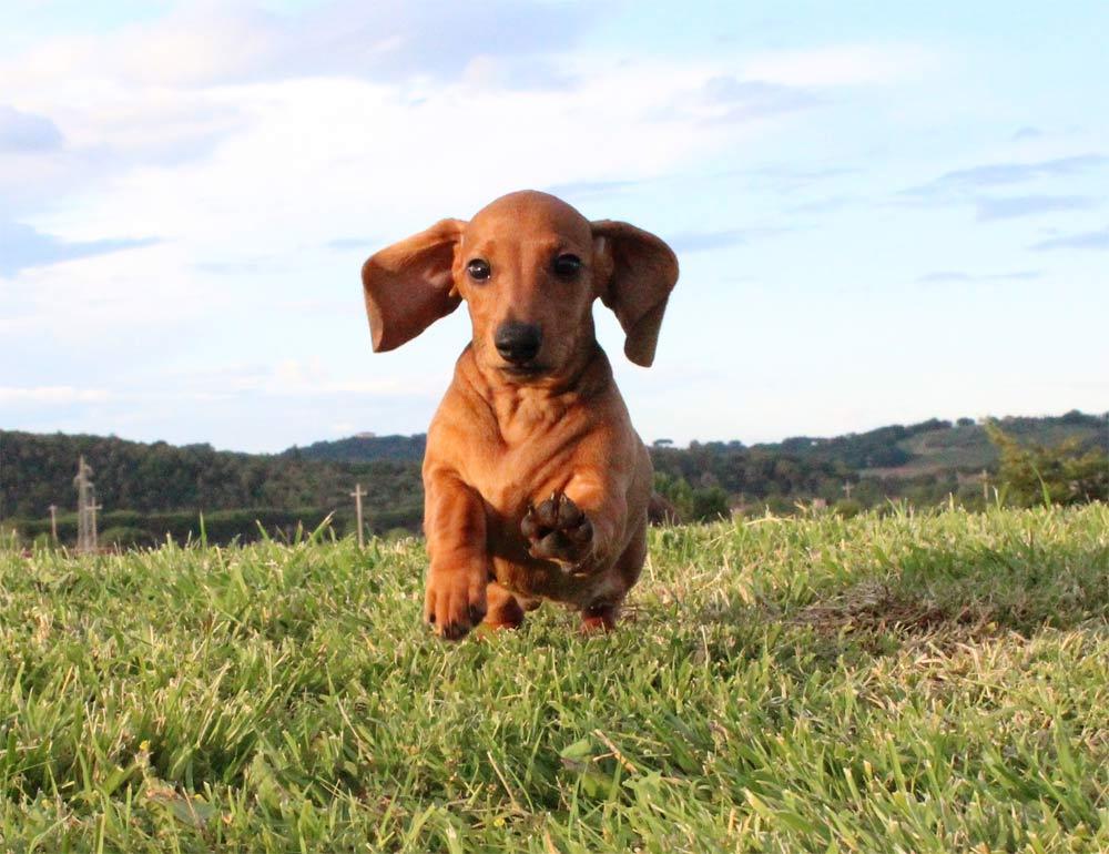 IDS Macon Best puppy