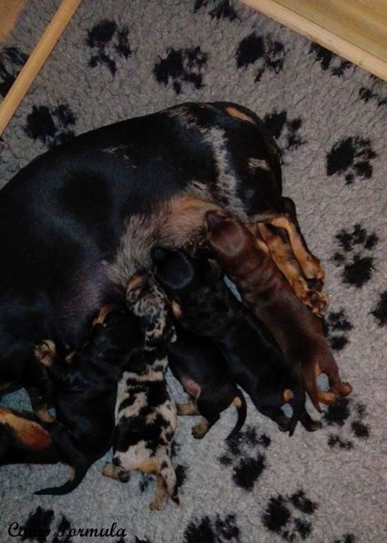 Lo spettacolo della pappa dei cuccioli