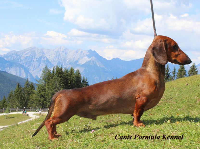 Canis Formula Ares in montagna al fresco