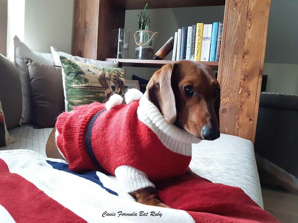 Canis Formula Bat Ruby Natale
