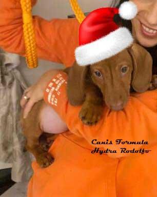 Canis Formula Hydra Rodolfo con cappello di Babbo Natale
