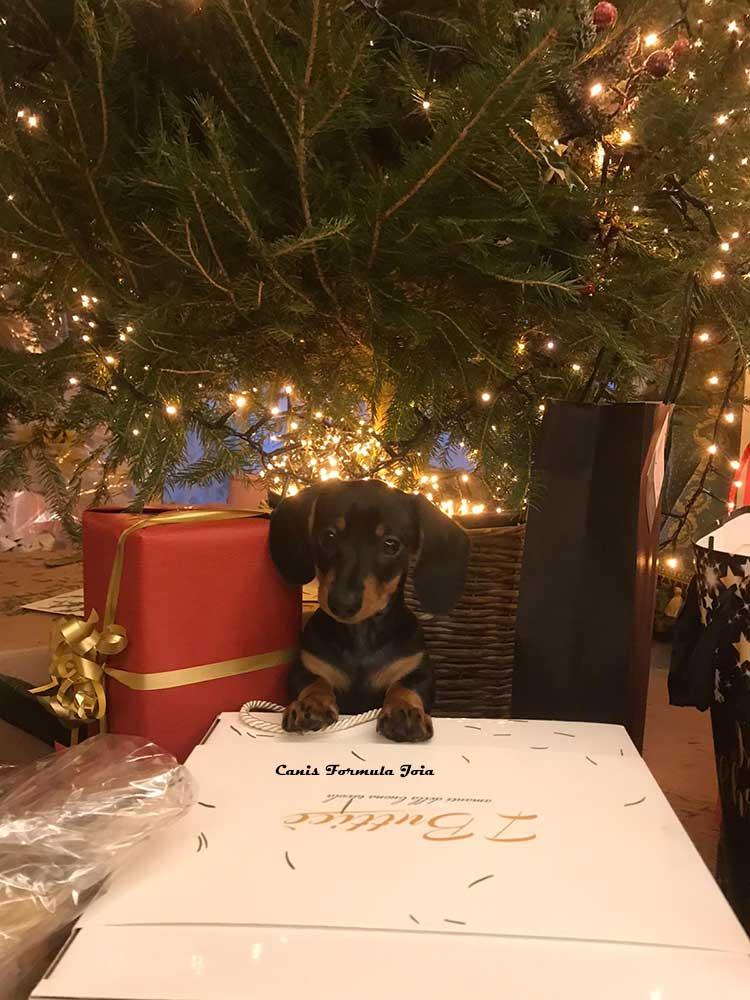 Canis Formula Joia tra i regali di Natale