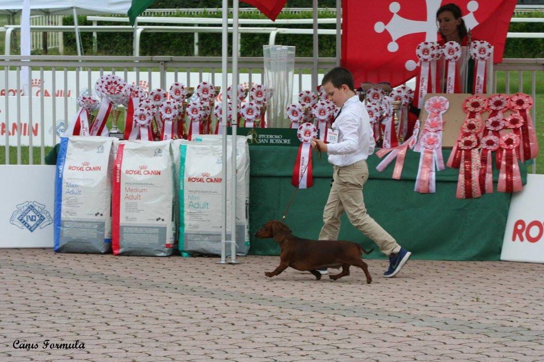 Junior Handler