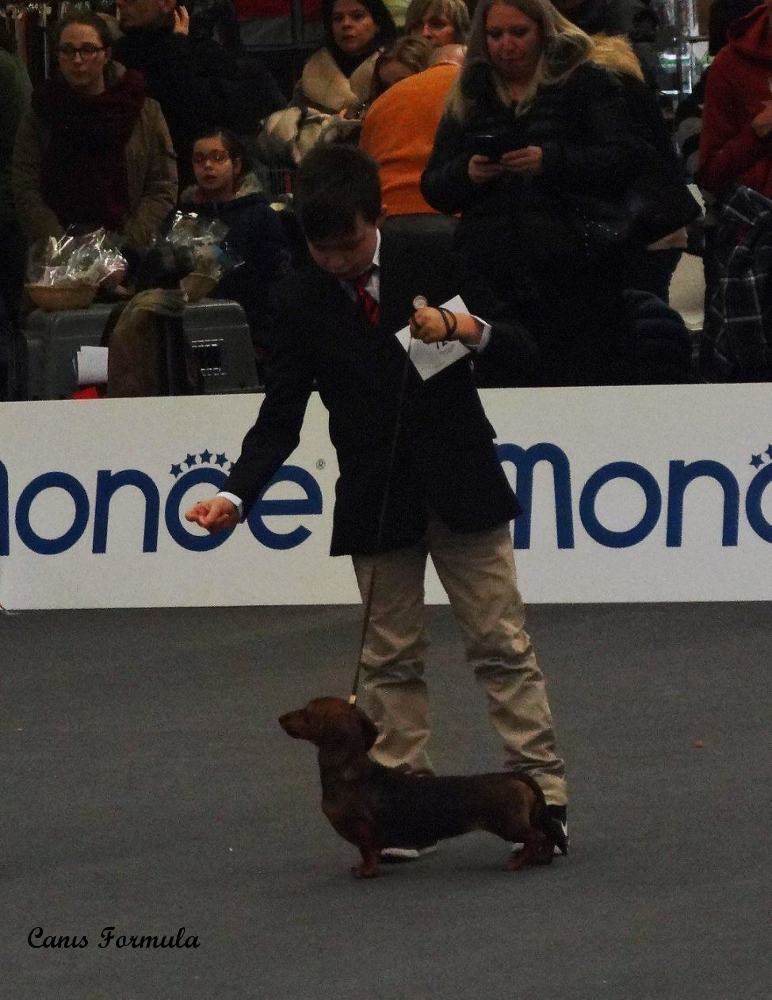 Junior Handler Dachshund kaninchen smooth haired