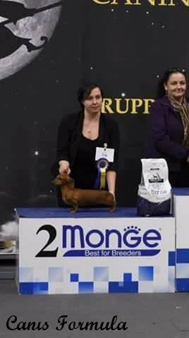 Ris Best in show dachshound a Modena