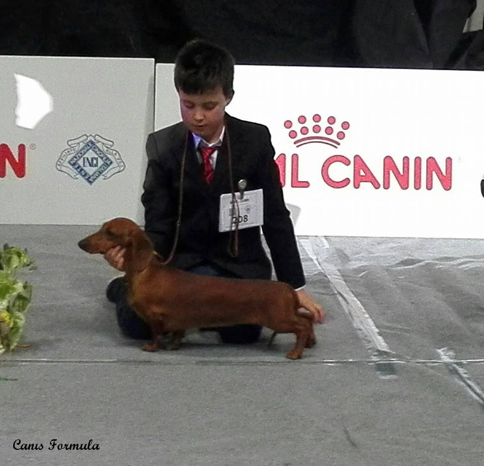 junior handler volterra