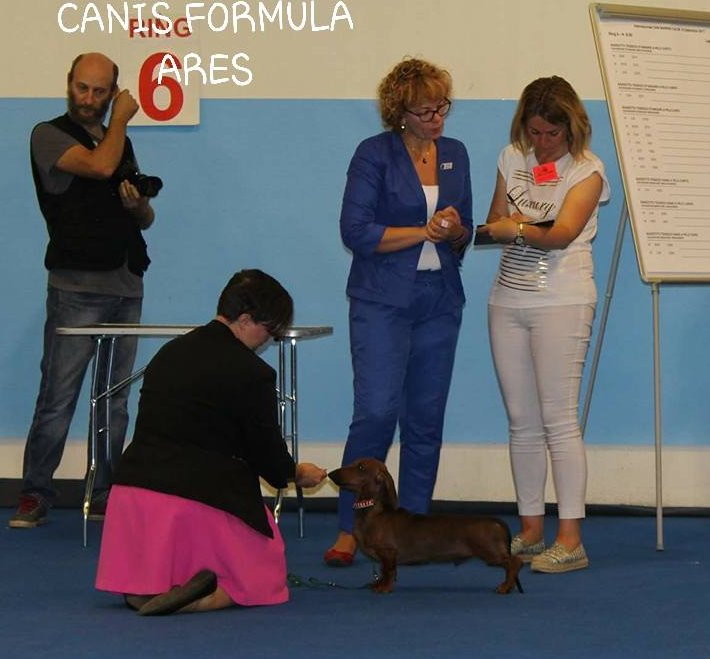 Canis Formula Ares in posizione