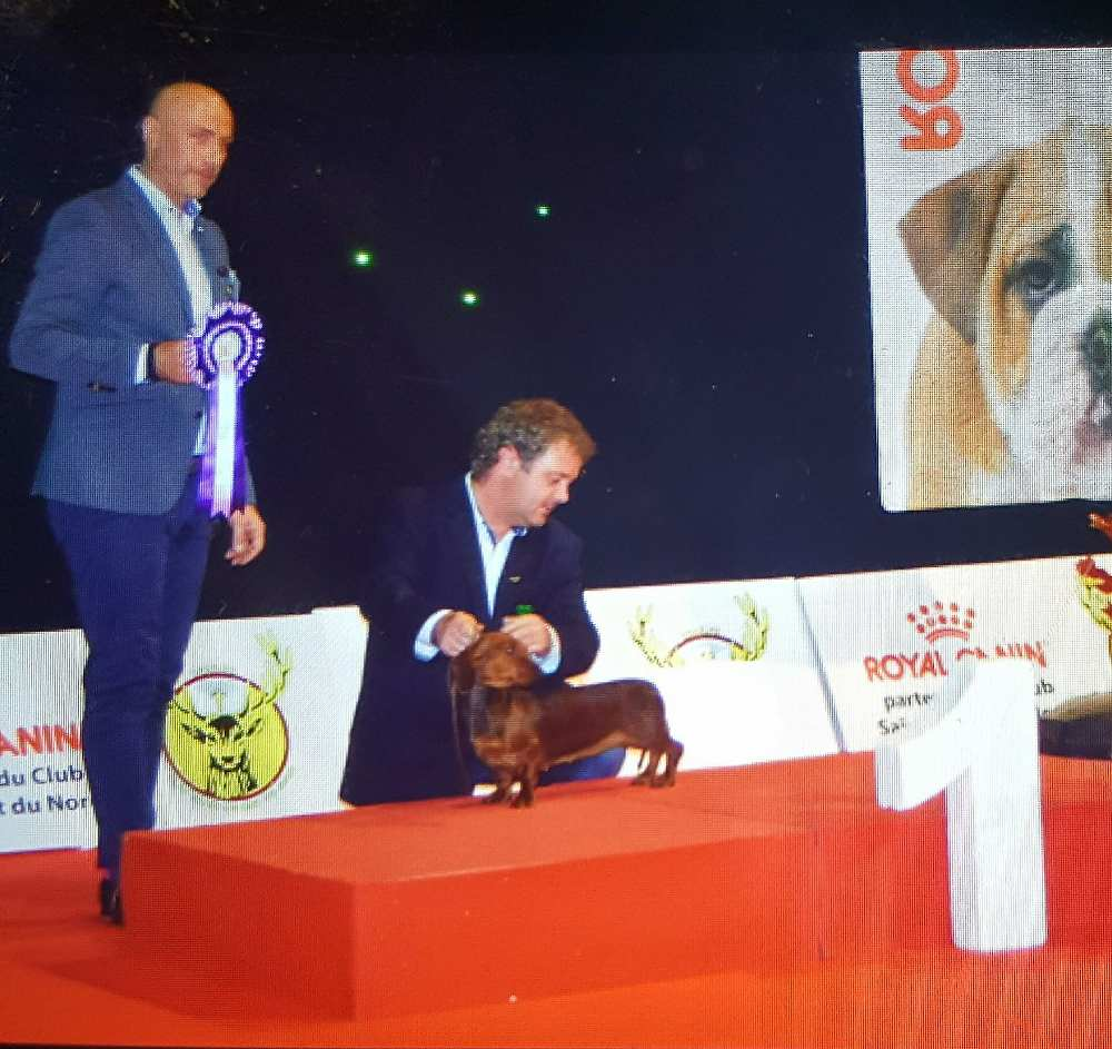 Primo posto miglior bassotto International Dog Show DOUAI