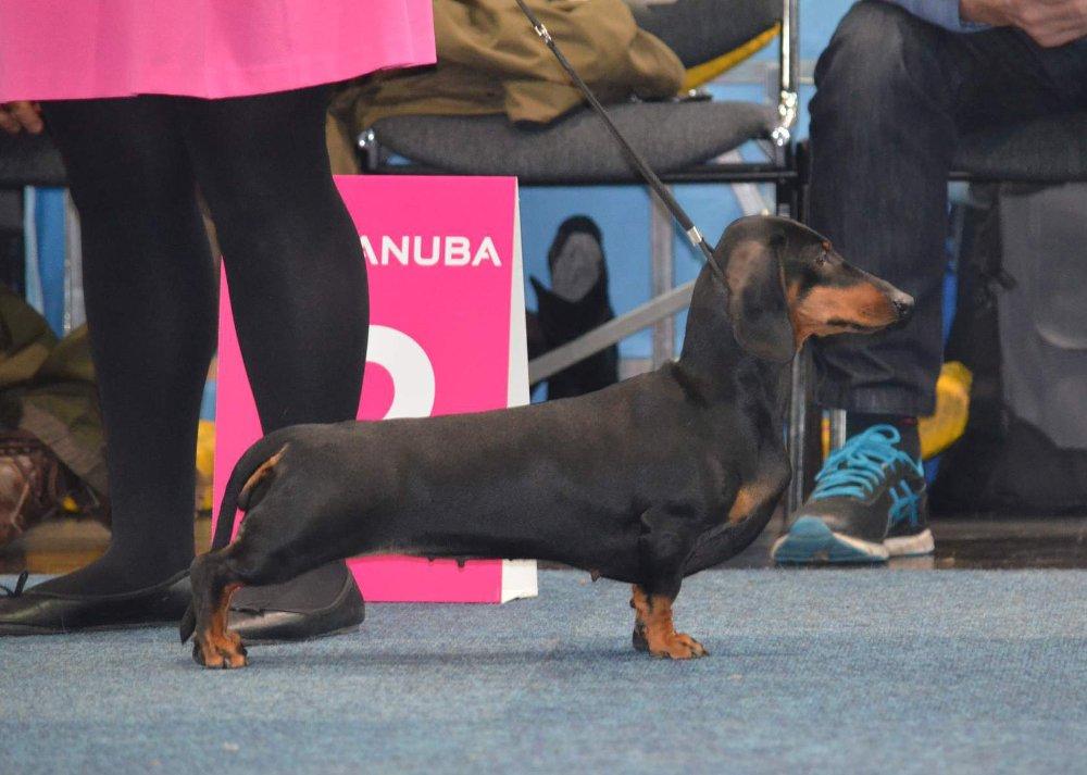 Standard Ermengarda al World Dog Show