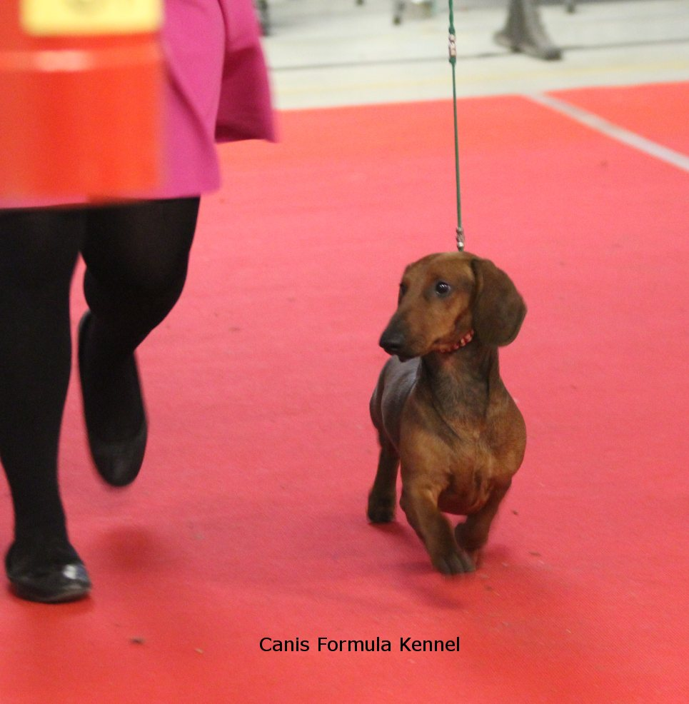 Canis Formula Ares in movimento