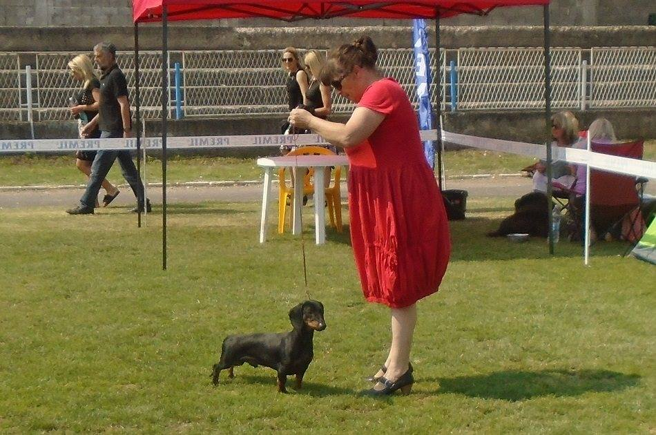 Canis Formula Augustus Junior Champion Of Serbia