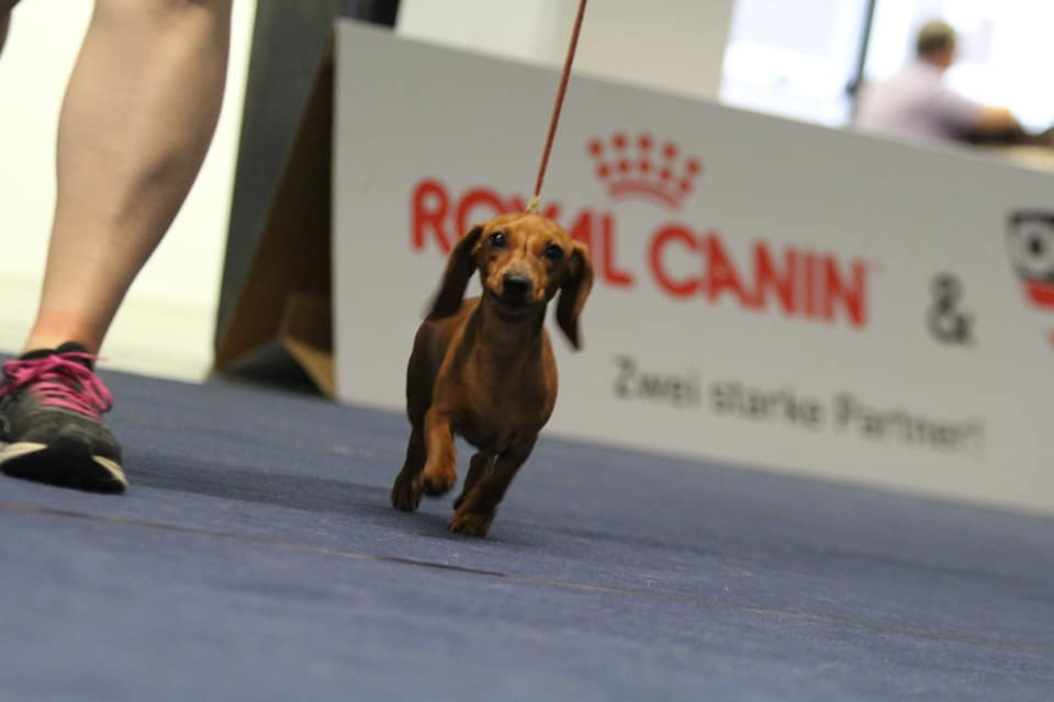 Innsbruck Dog Show