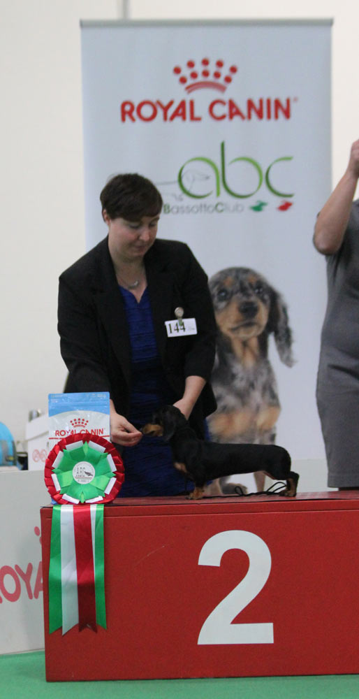 Best in show bassotti puppy