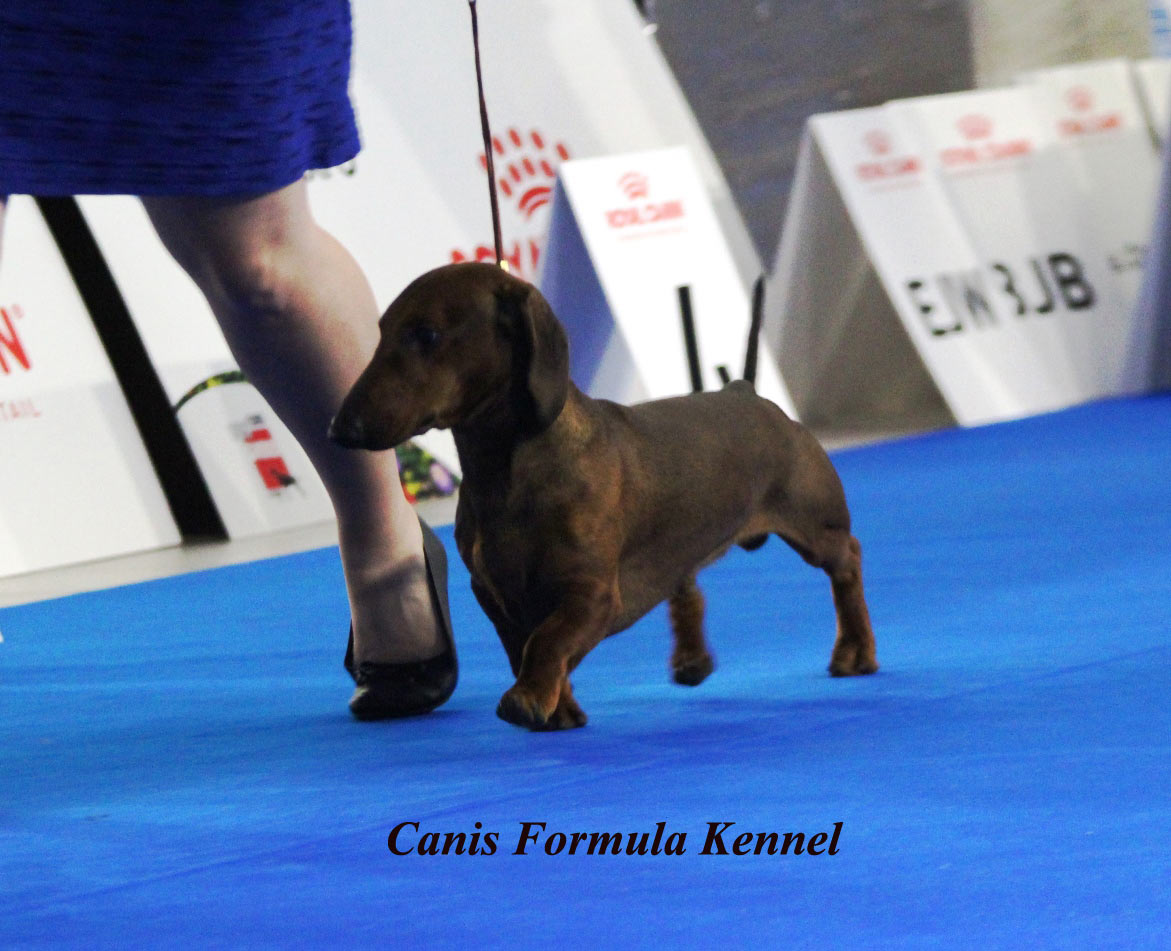 Canis Formula Ares in movimento - Euro Dog Show 2018