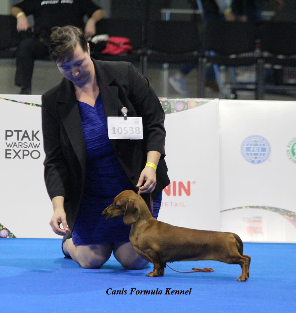 Risults Dachshound in Expo and Working Trial 2018