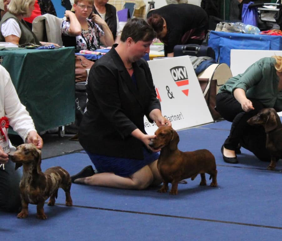 European Dog Show 2019 - bassotto standard