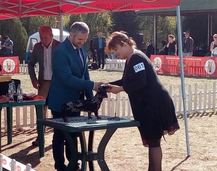 kaninchen arlecchino in bulgaria