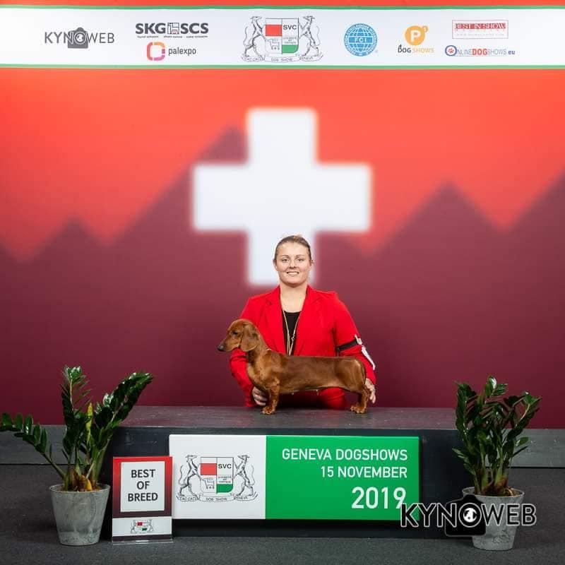 Bassotto standard CACIB Ginevra Svizzera