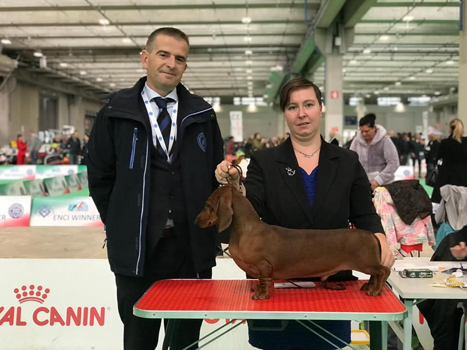 Latin Winner Canis Formula Bacco