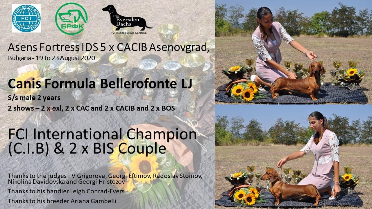 Canis Formula Bellerofonte - Asenovgrad