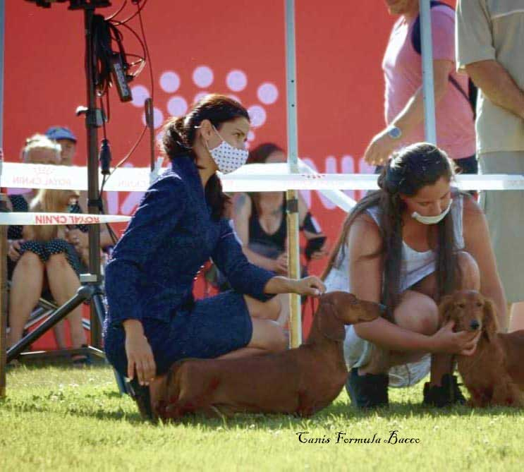 Canis Formula Bacco - handler Valentina Zupan